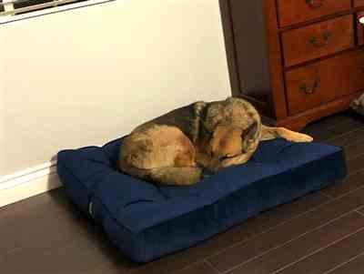 LeAlan Hafner verified customer review of Ali Jewel Ortho Square® Orthopedic Luxury Dog Bed