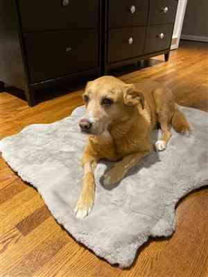 Danielle lieberman verified customer review of Ruby® Orthopedic Luxury Dog Bed Rug