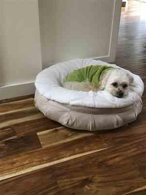 Cindy Jordan verified customer review of Pearl Puff® Orthopedic Luxury Dog Bed