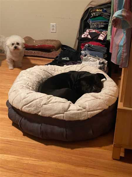 Micki Cianciosi verified customer review of Pearl Puff® Orthopedic Luxury Dog Bed