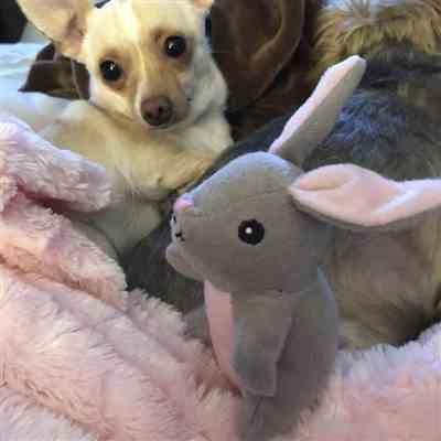 Tawny verified customer review of Bunny 'n Carrot Burrow Puzzle Dog Toy