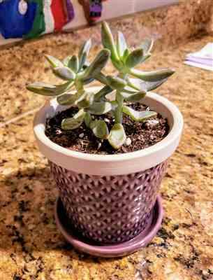 Lucien V. verified customer review of 1 succulent/ month - 6 month subscription
