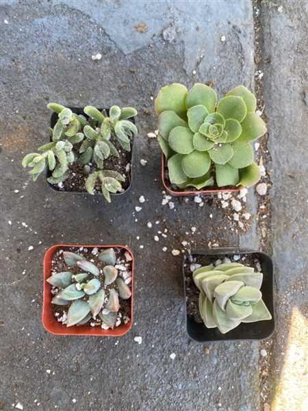 Katie Loomas verified customer review of 4 succulent/ month - 12 month subscription