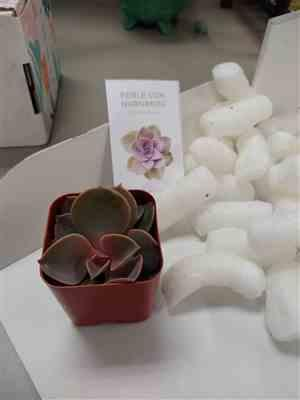 Leah Hengelbrok verified customer review of Gift 1 succulent/ month - 3 month subscription