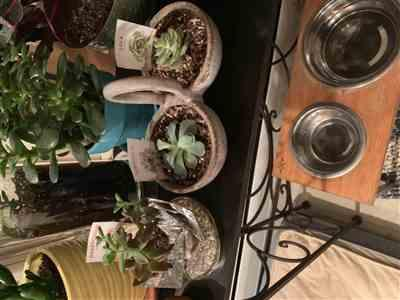 Marylou F. verified customer review of Gift 3 succulent/ month