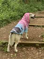 Anonymous verified customer review of Summerwave Dog Hoodie