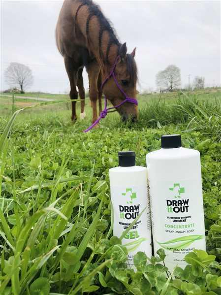 Draw Liniment Draw It Out Horse Liniment 16oz GEL Review