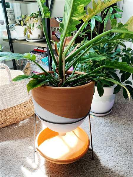 Holistic Habitat  Large Natural and White Terra Cotta Funnel Planter with Wire Base Review