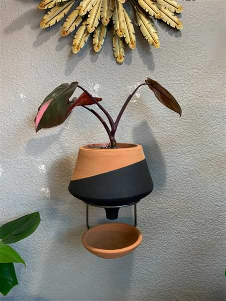 Melissa Coble verified customer review of The Holistic Habitat Wall Mount Funnel Planter-Black