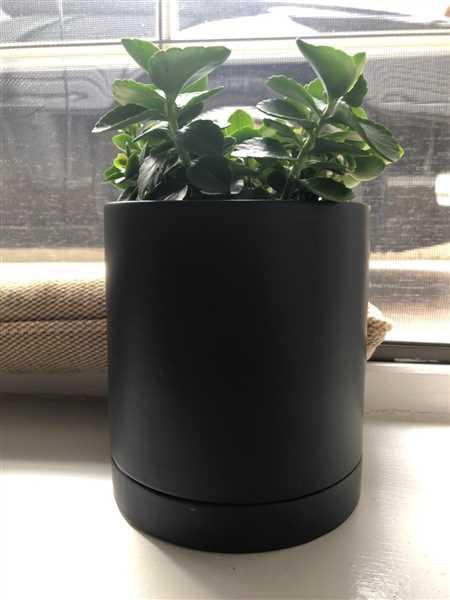 Holistic Habitat  Black Practical Pot with Saucer - Medium Review