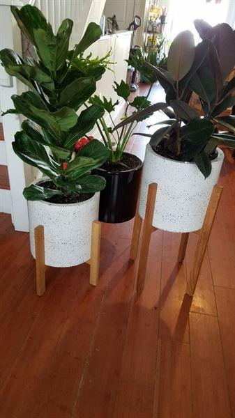 Holistic Habitat  Summer Terrazzo Planter & Stand Tall Review