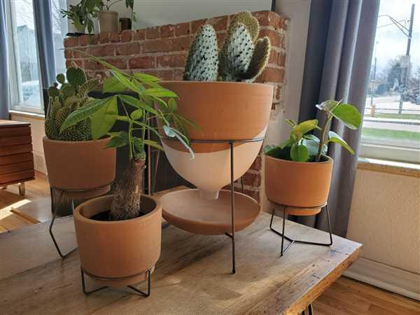 John Simon verified customer review of Geo Terracotta Pots (Set 3) on Metal Bases