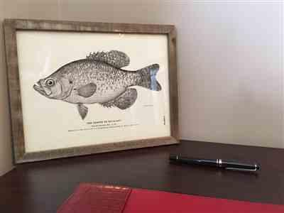 Adam R. verified customer review of Rainbow Trout — Reproduction Print