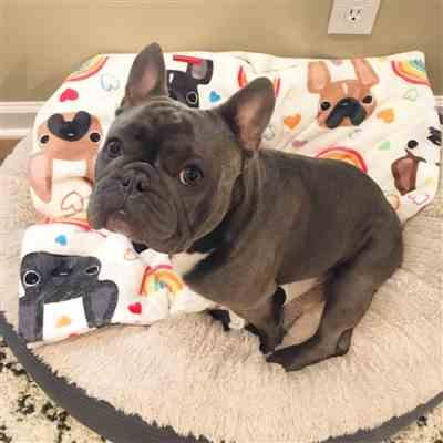 Lauren R. verified customer review of LOVE IS LOVE French Bulldog Fleece Blanket - Large