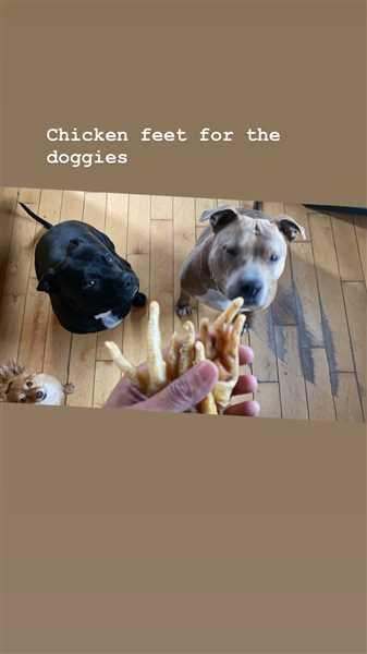 Campfire Treats Chicken Feet for Dogs Review