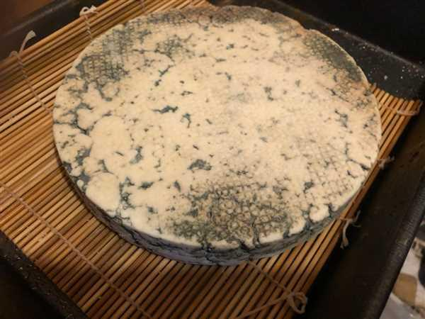 New England Cheesemaking Supply Company Blue Cheese Mold Review