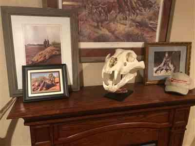 Philip B. verified customer review of Replica Extra Large African Lion Skull