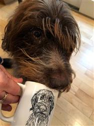 Lara V. verified customer review of Wilkins the Wirehaired Pointing Griffon - Mug