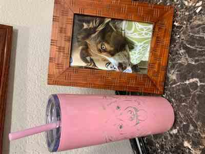 Wanda H. verified customer review of Tucker the Collie Shepherd - 20oz Skinny Tumbler