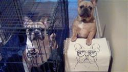 Inkopious Franco the French Bulldog - Tote Bag Review
