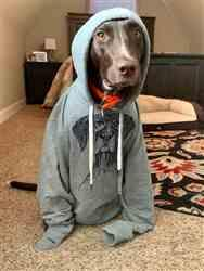Jessica A. verified customer review of Mattis the German Shorthair Pointer - French Terry Hooded Sweatshirt