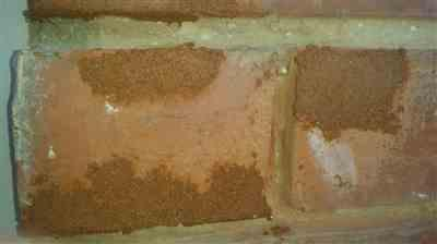 Stephen Cooke verified customer review of Brick Coating
