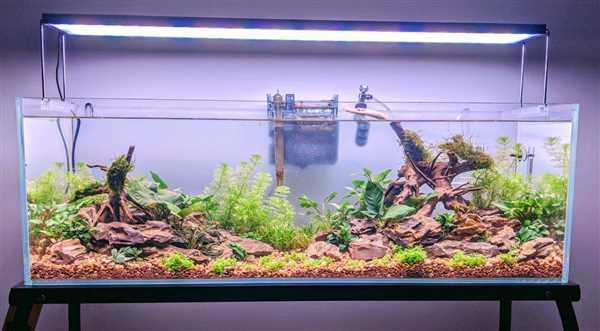 Lindsay Shelden verified customer review of Twinstar II E-Series Planted LED Strip