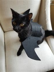 Pet Dog Cat Bat Wings Costume Black Puppy Kitten Clothing