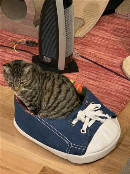 Napping JoJo Sneaker Cat Bed with Rainbow Fleece Review