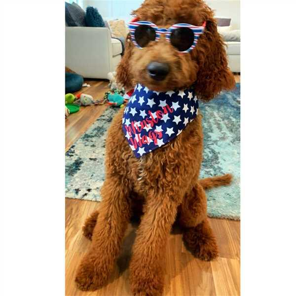 WagSwagCo All American Pupper Bandana Review