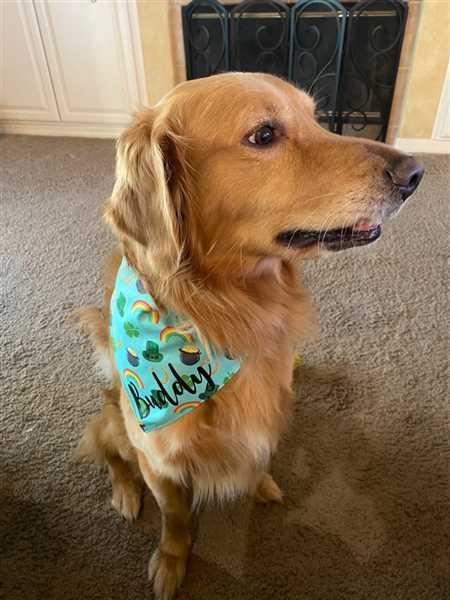Deana B. verified customer review of Irish Luck Bandana
