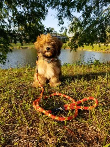 Pack Leashes American Beauty I Review