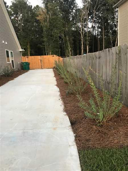 Brenton verified customer review of Tri-Color Dappled Willow Shrub