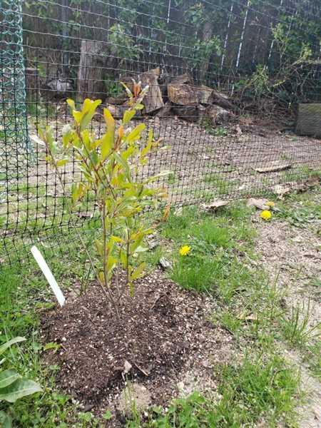 Fast-Growing-Trees.com McIntosh Apple Tree Review