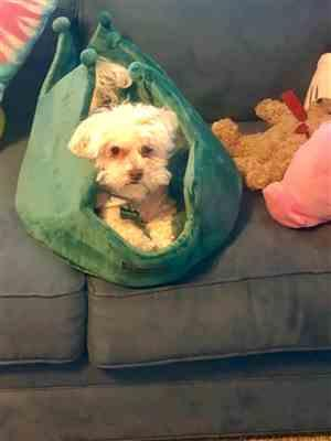 Liza O. verified customer review of TEAL CROWN DOG AND CAT BED