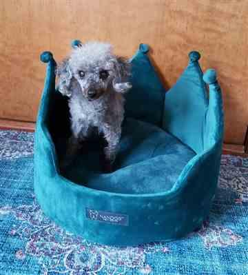 Wendy W. verified customer review of TEAL CROWN DOG AND CAT BED