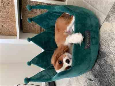 Shayna B. verified customer review of TEAL CROWN DOG AND CAT BED