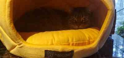Kaitlynn G. verified customer review of PINEAPPLE SHAPE DOG AND CAT BED