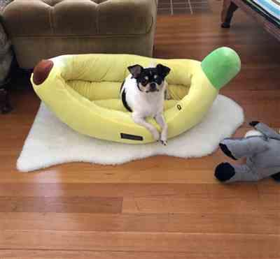 Lisa Stevens verified customer review of BANANA SHAPE DOG AND CAT BED