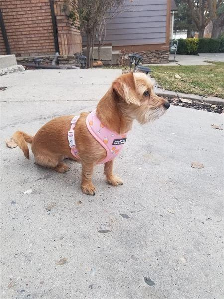 Ila M. verified customer review of Mimosas Reversible Dog Harness