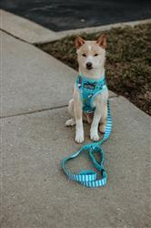Katelynn H. verified customer review of Unicorn Reversible Dog Harness