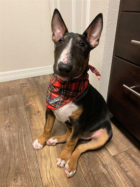 Samantha H. verified customer review of Red 'n' Yellow Plaid StayCool Cooling Bandana