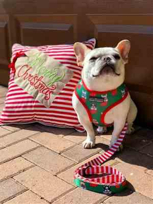 Chris Marzec verified customer review of Christmas Harness and Leash Set