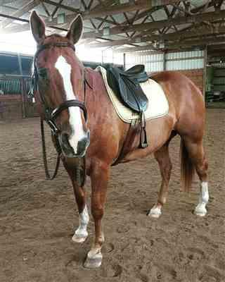 Maddi verified customer review of Henri de Rivel Equipe Covered Close Contact Saddle