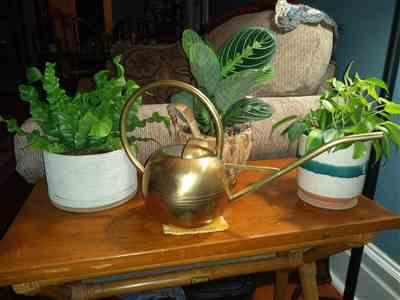 Dawn M. verified customer review of Brass Watering Can