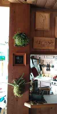 Lorraine I. verified customer review of Platycerium sp - Staghorn Fern