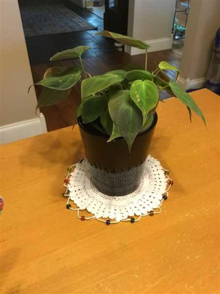 Kathy Macomber verified customer review of Philodendron micans