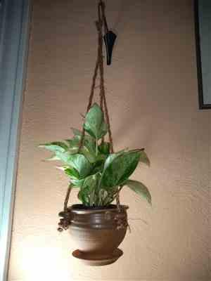 Pistils Nursery Hand Thrown Hanging Planter - Dipped Stoneware Review
