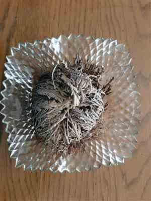 Lisa Kreager verified customer review of Resurrection Plant with Hidden Crystal