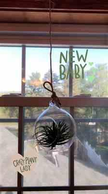 Nicole P. verified customer review of Ionantha Guatemala Air Plant